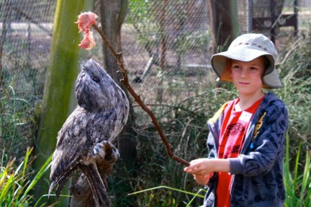 Mitchell feeding tawny frogmouth (photo: Shellie)