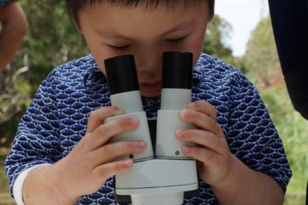 Looking through the microscope at Brimbank Park