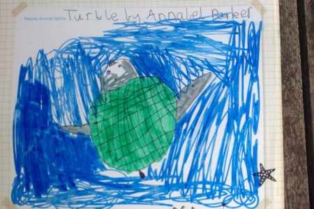 Annabel Parker's favourite marine animal - a turtle!