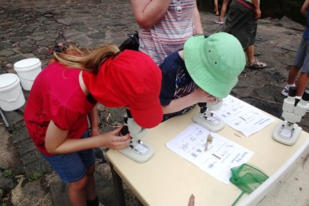 Using microscopes to see minibeasts